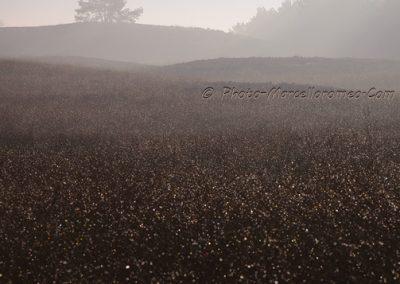 Hazy Landscape_marcelloromeo_6121