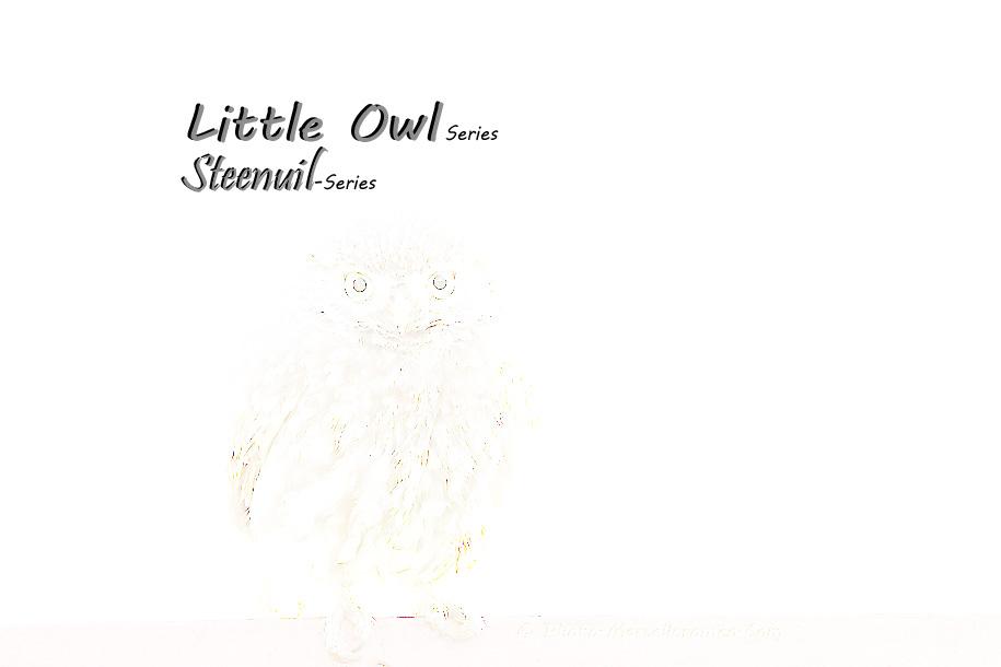 0000000000000_Steenuil_Little Owl_Athene Noctua_marcelloromeo_2604